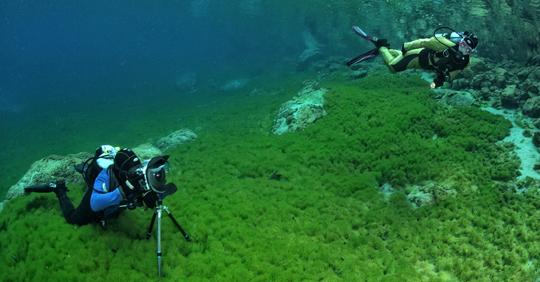 Inserto GITZO3 Gitzo ocean traveler tripod, also for underwater use
